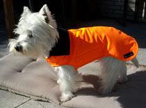 Hunderegenmantel Maßanfertigung