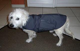 Unser Benni mit seinem Hundemantel nach Maß