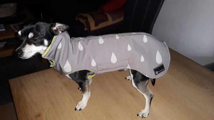 Softshell Hundemantel maßgefertigt