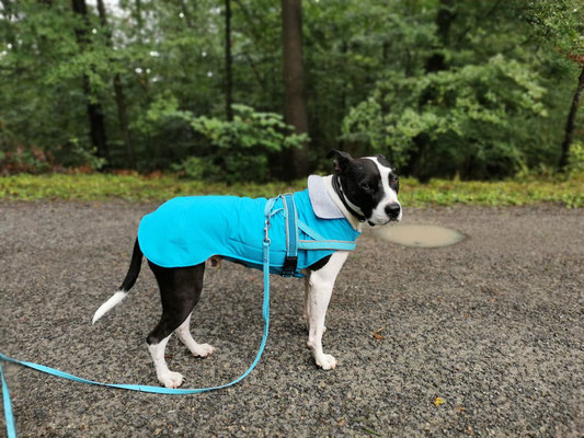 Hundemantel Softshell Maßanfertigung