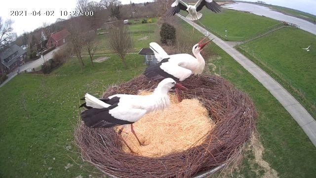 Nest mit Ems-Blick sucht Storchenpaar