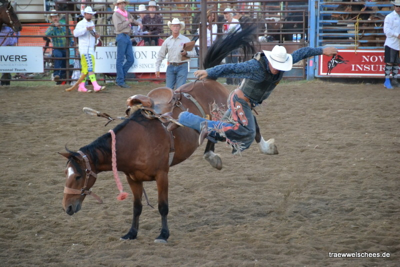Bronc Saddle Riding