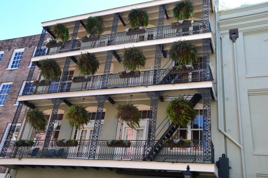 New Orleans: ...und noch eine, diesmal mit Farn...