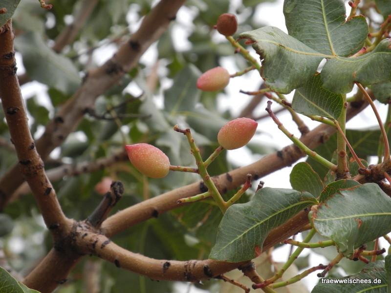 ...und die Früchte