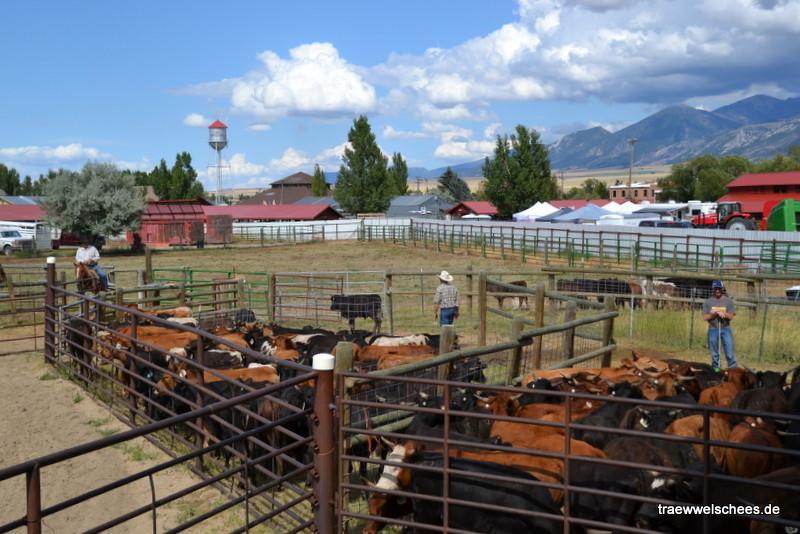 Die Rodeo-Arena