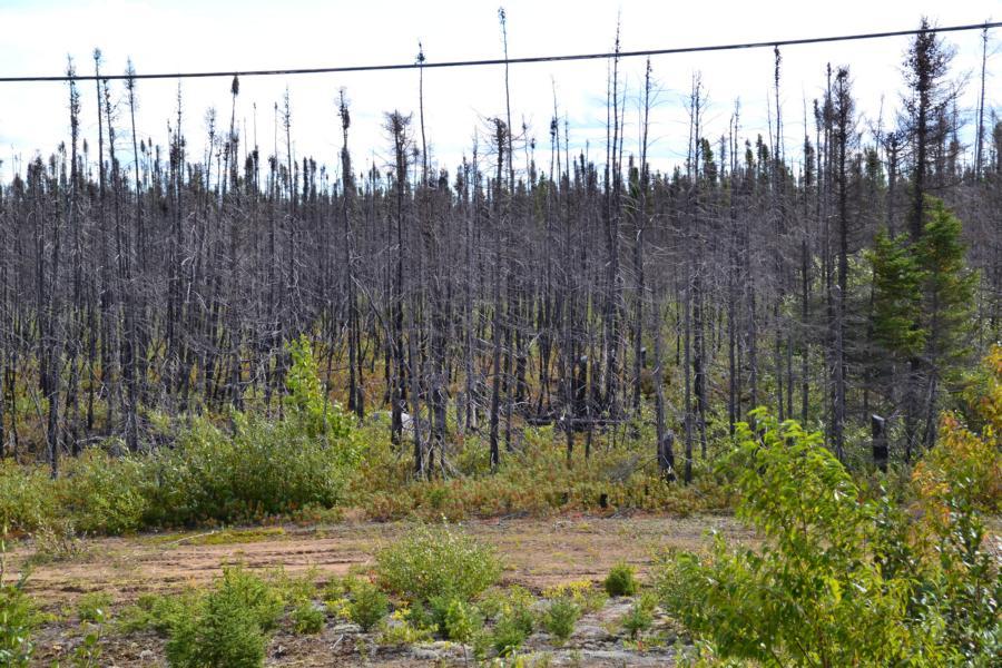 das Feuer hat viel Wald vernichtet