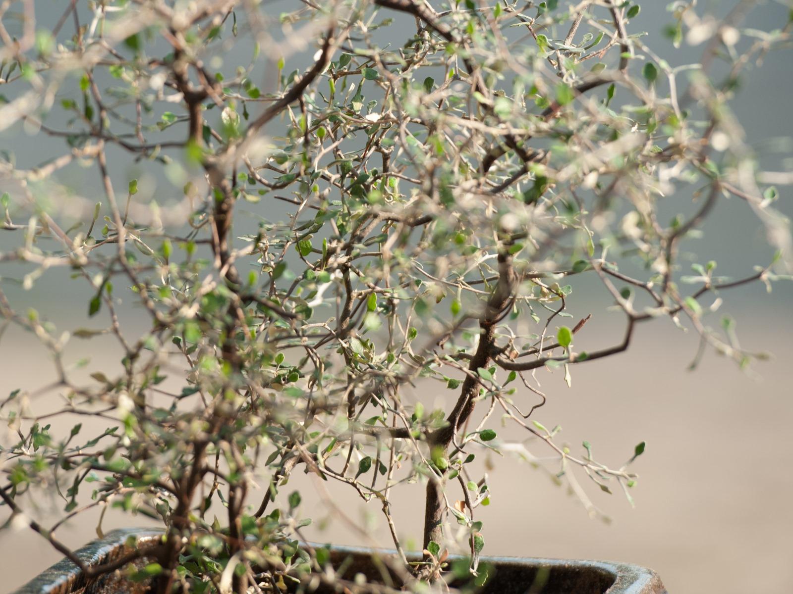Pflanzen der gr ne onlineshop for Onlineshop pflanzen