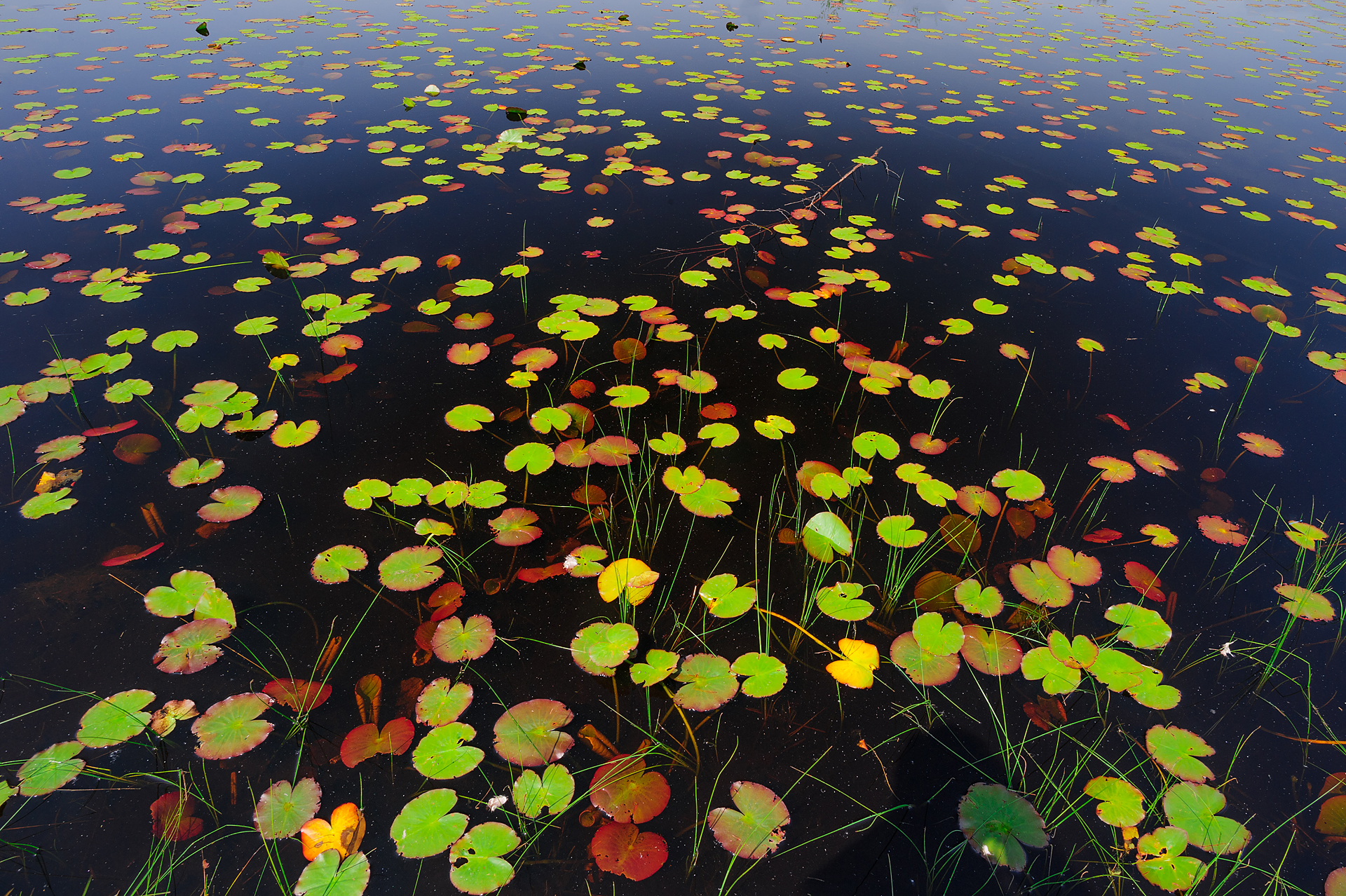 Moorsee Netherlands