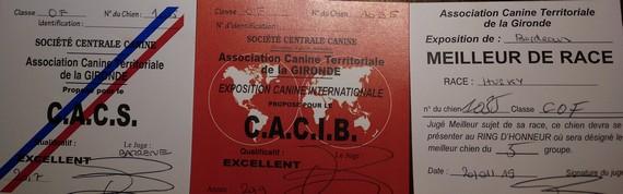 """GONSSOR OKILANY"":     C.A.C.S - C.A.C.I.B. - MEJOR DE RAZA"