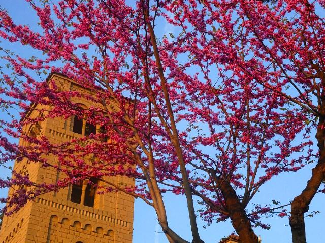 Весна в Испании - время цветения