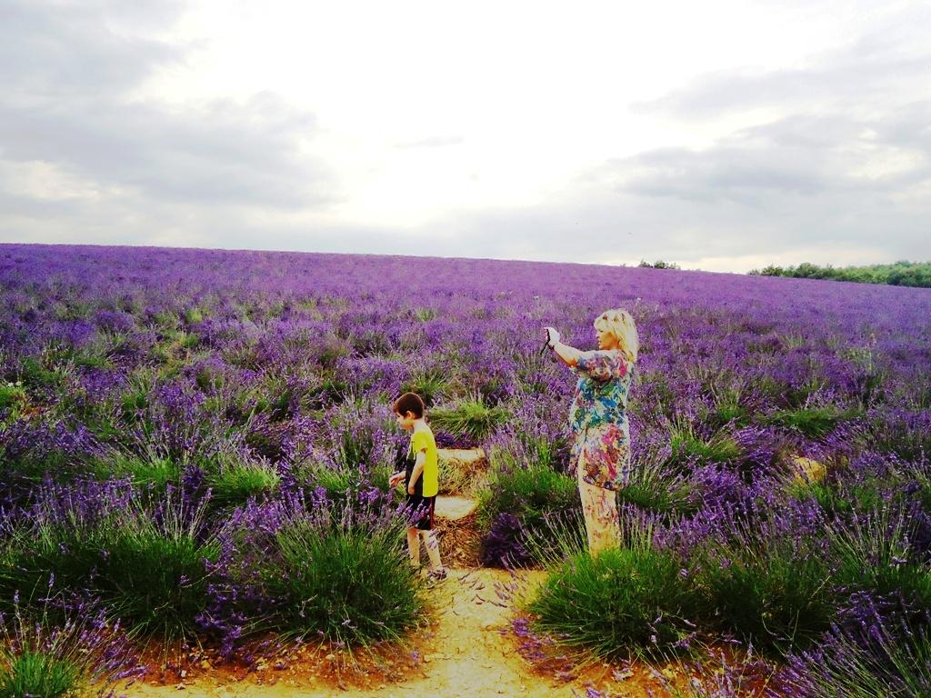 Где цветёт лаванда в Испании