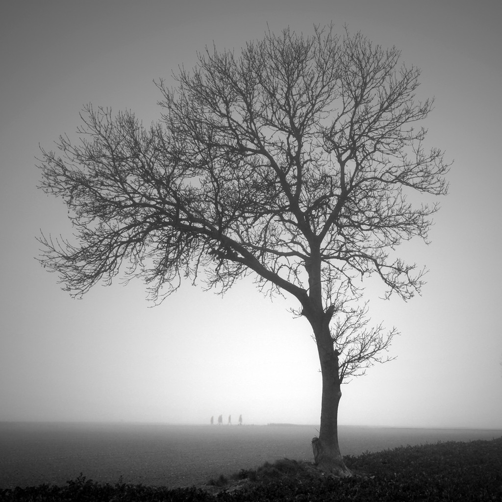 Olivier Gherrak-L'arbre