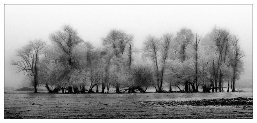 Arbres givrés©Pascal Lecoeur