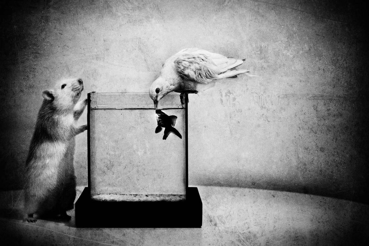 Jorris Martinez-La colombe, le poisson et le rat