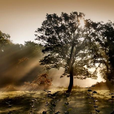 Brumier matinal©Pascal Lecoeur