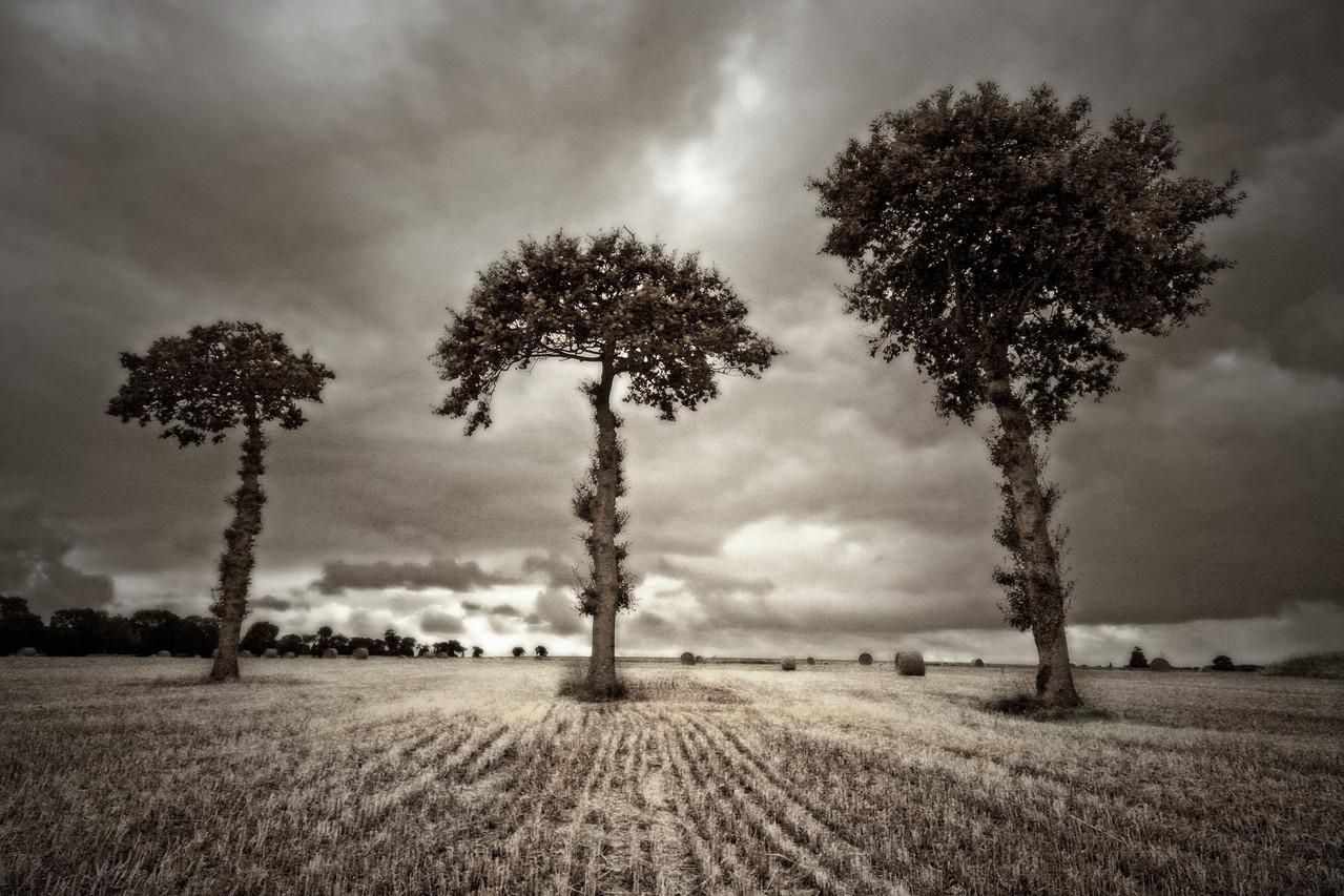 Olivier Gherrak-3 arbres