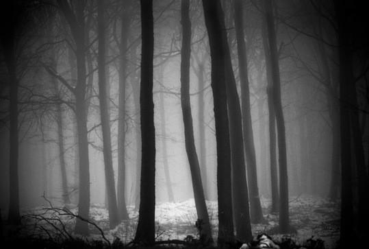 Brume©Pascal Lecoeur