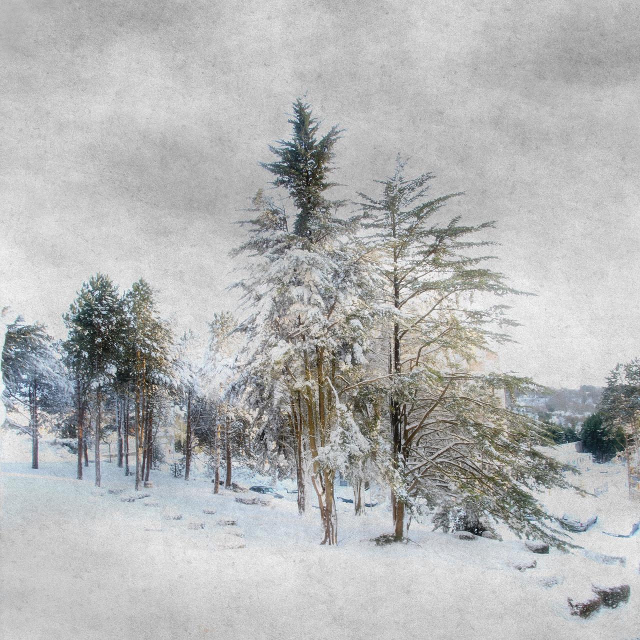 Michel Chauvin-Lumière sur l'arbre 1