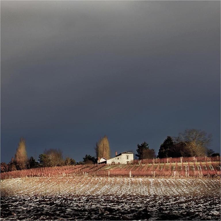 La vigne - Pascal Lecoeur