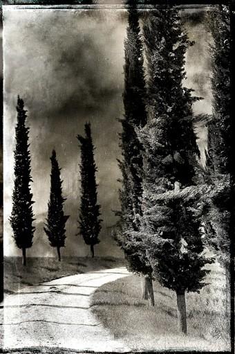 Allée de cyprès ©Philippe Delval