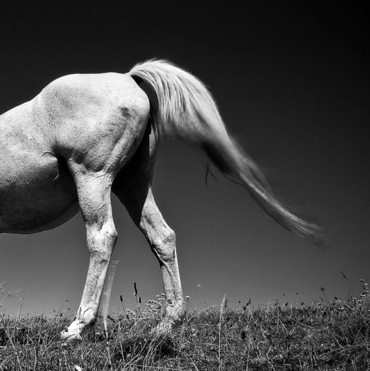 Le cheval ©Pascal Lecoeur