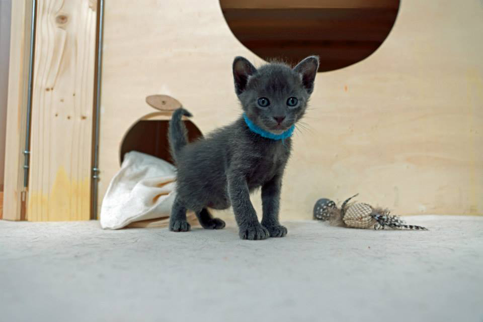Lamon, 4 Wochen alt