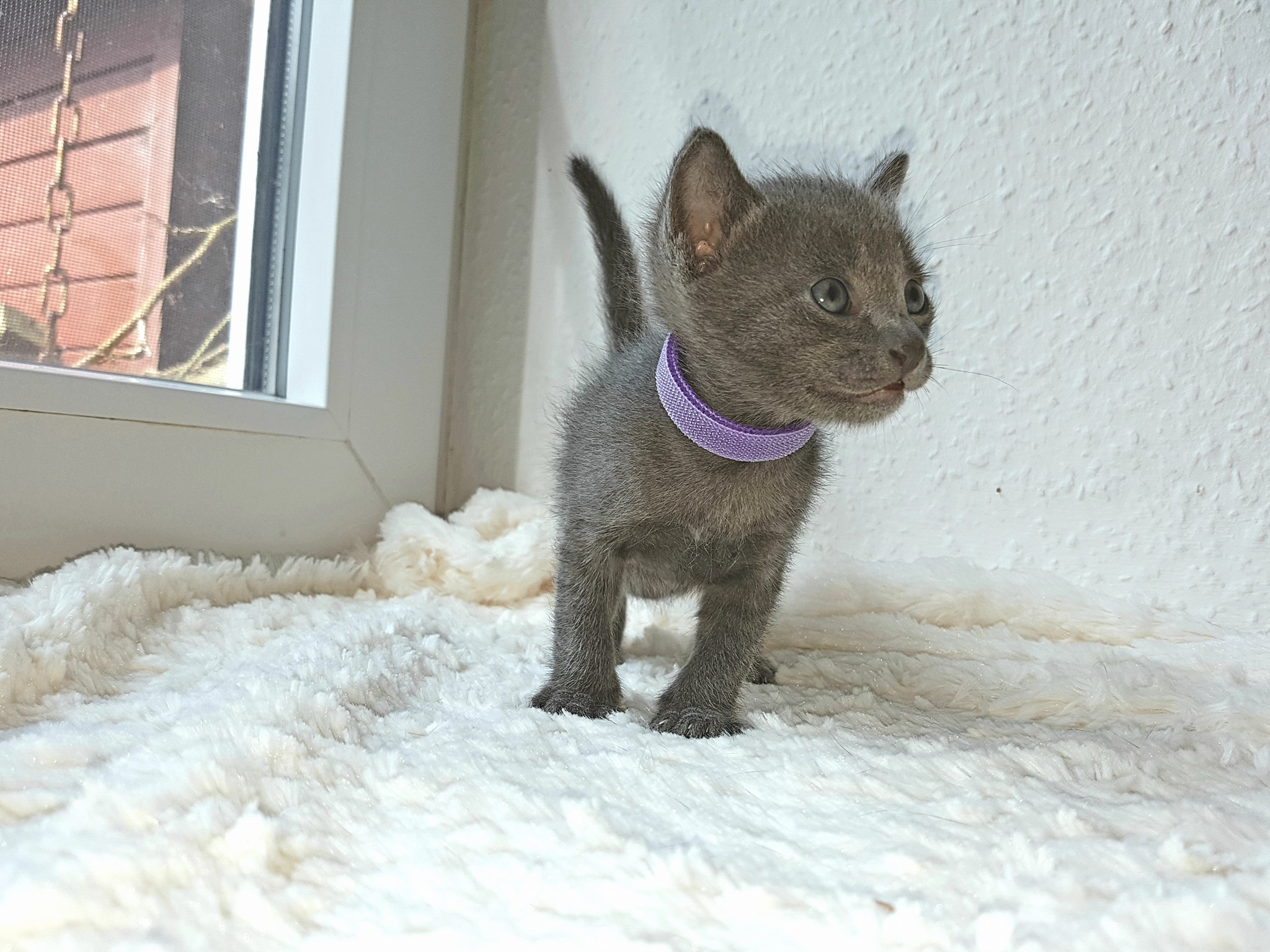 Oscar, 4 Wochen alt
