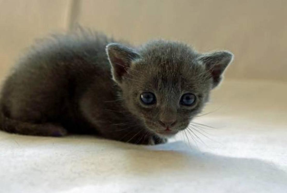 Anik, 3 Wochen alt