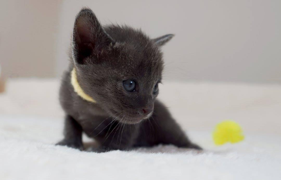 ZaThai, 3 Wochen alt