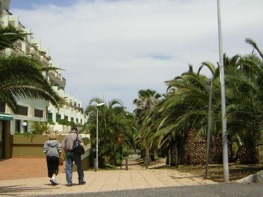 Bild: Weg eingefasst von Palmen und begleitet mit ein paar kleinen Läden zum Strand von Puerto de la Cruz von der Langzeitwohnung.
