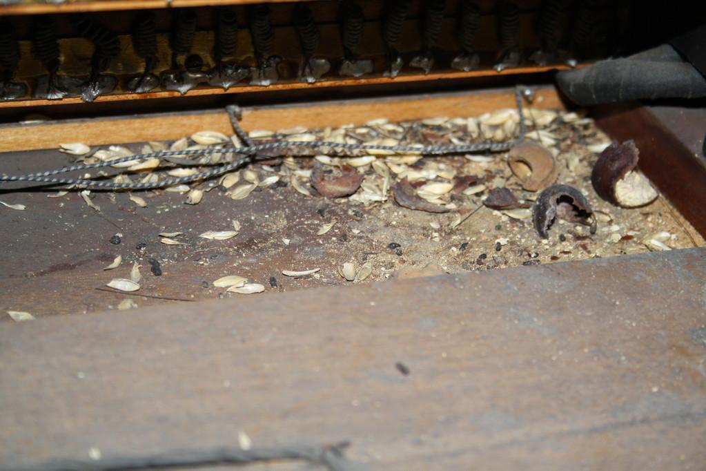 Sogar eine Maus wohnte eine Zeit in der Orgel