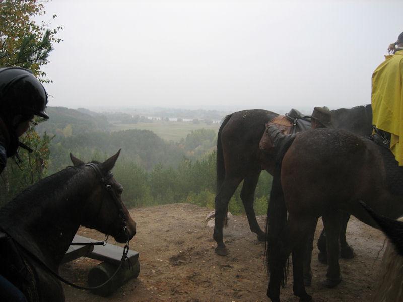 Wasser und nasse Pferde wohin das Auge blickt