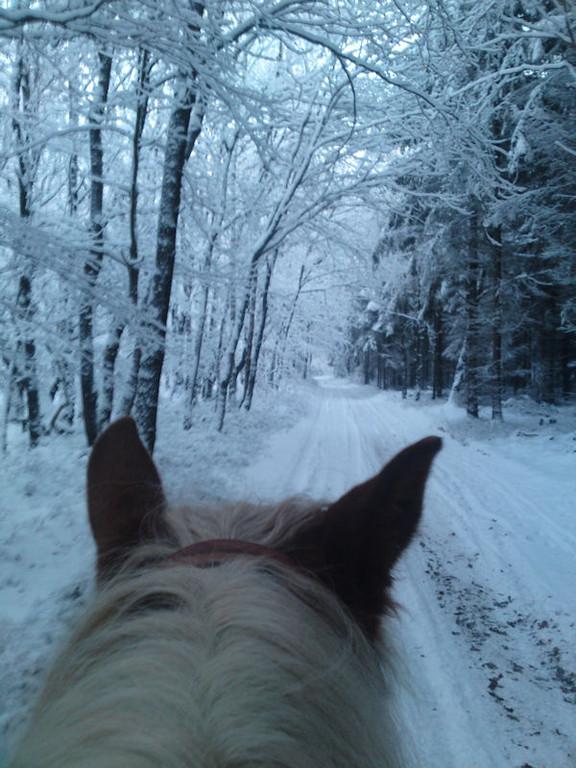 18. Dezember - Wieder Schnee ohne Ende, aber noch gut zu Reiten.