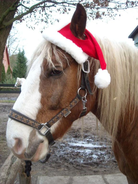 14. Dezember - wieder die blöde Kappe...  :-(