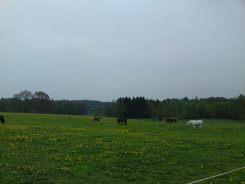 08. Mai - Hofleben...