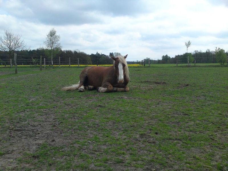 02. Mai - voller Grasbauch läuft nicht gern