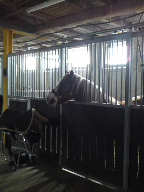 Tex hinter Gittern