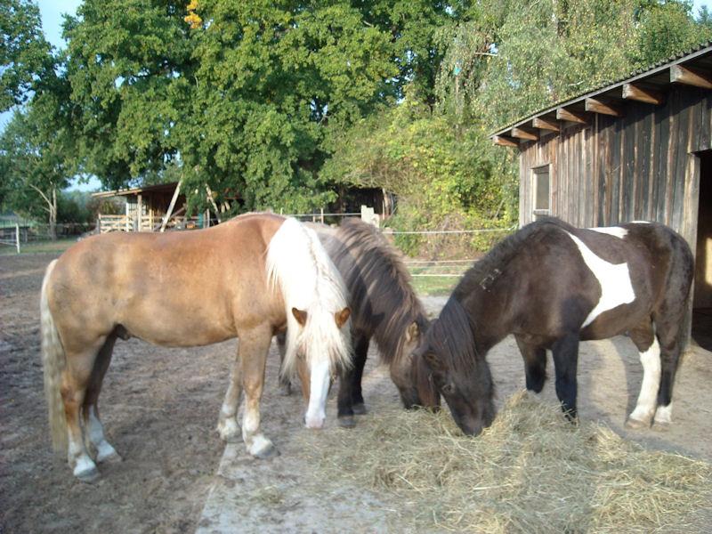 und für Somi, Eilifur & Tex  (für Maggie & Leo gab´s auch Frühstück, aber halt kein Foto)