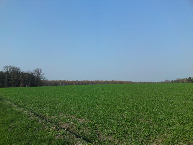 12. April - zum Anweiden raus auf die Wiesen