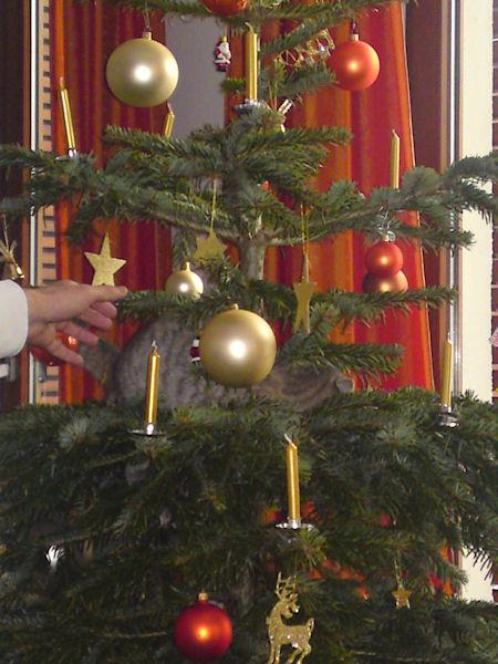 25. Dezember - Hamburg... Christbaum mit Katzenschmuck   ;-)