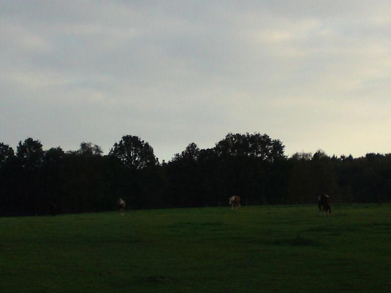 12. Oktober - Komm her liebes Pferdchen...