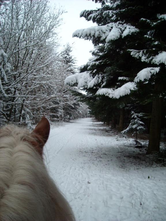 03. Januar - doch wieder im Sattel unterwegs