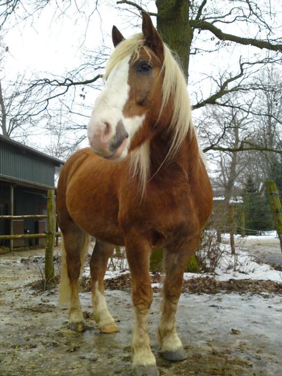 06. Februar - Horse on Ice