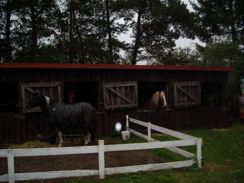 Auch wir Pferde hatten endlich ein trockenes Plätzchen und frisches Heu zur Stärkung bekommen