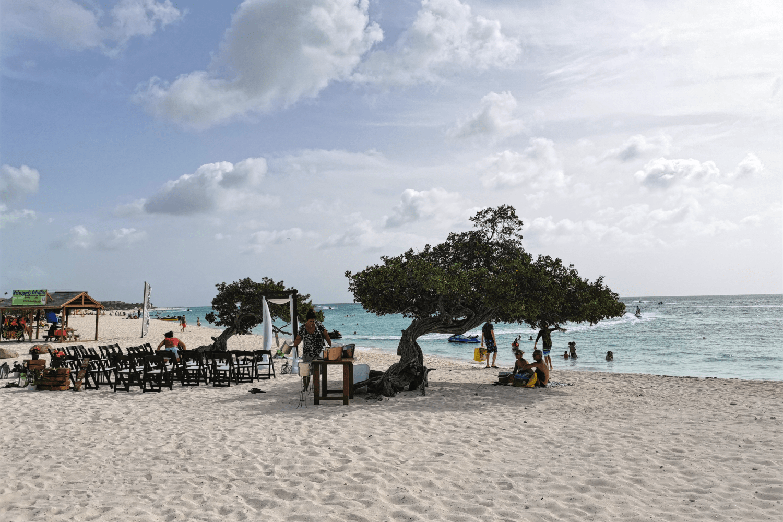 Die berühmten Divi Divi Bäume am Eagle Beach