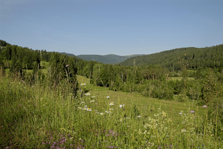 Feldberg am Horizont