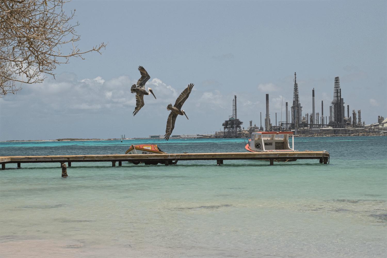 Ein einmaliges Erlebnis: baden mit Pelikanen am Roger's Beacht