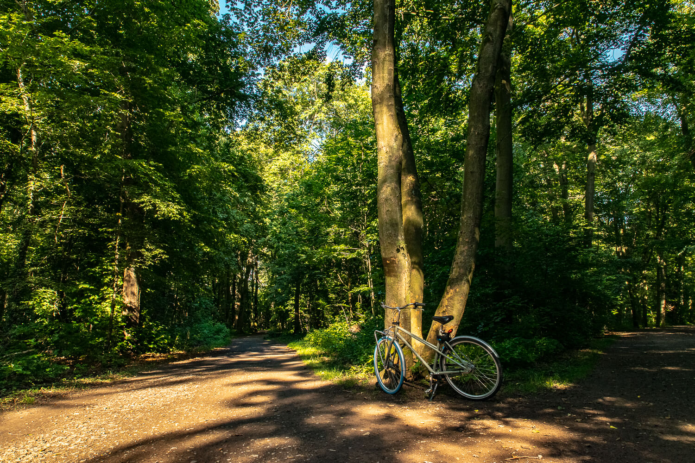 Eilenriede - größer als der Central Park in New York