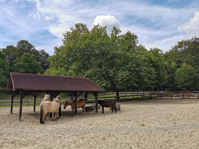 Pferde im Grugapark
