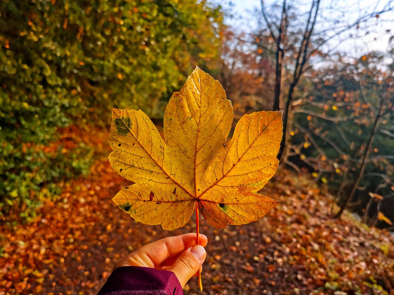 Herbststimmung im Nationalpark Hunsrück-Hochwald